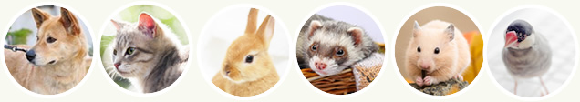 犬、猫、うさぎ、ハムスター、フェレット、チンチラ、小鳥(小型インコ、文鳥など)